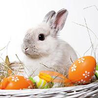 Húsvéti szalvéta - nyuszis